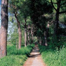 Parco Regionale Urbano di Aguzzano